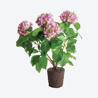 Hydrangea Drop-In - Lilac