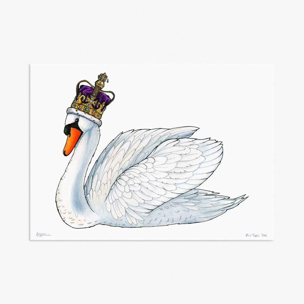 Mute Swan in St Edwards Crown A3 Print