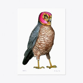 Sparrow Hawk in a Mexican Wrestling Mask A3 Print