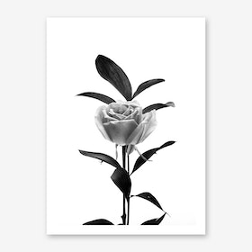 Solitude Art Print