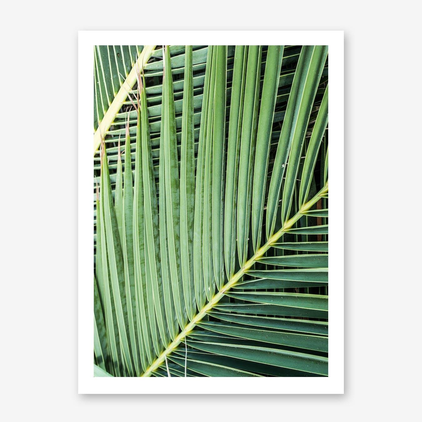Green Tropics In Print
