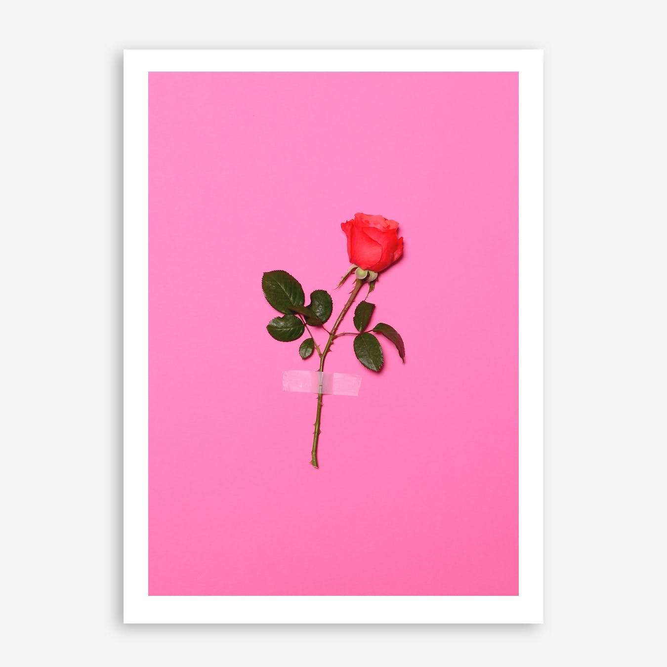 Wall Flower In Print