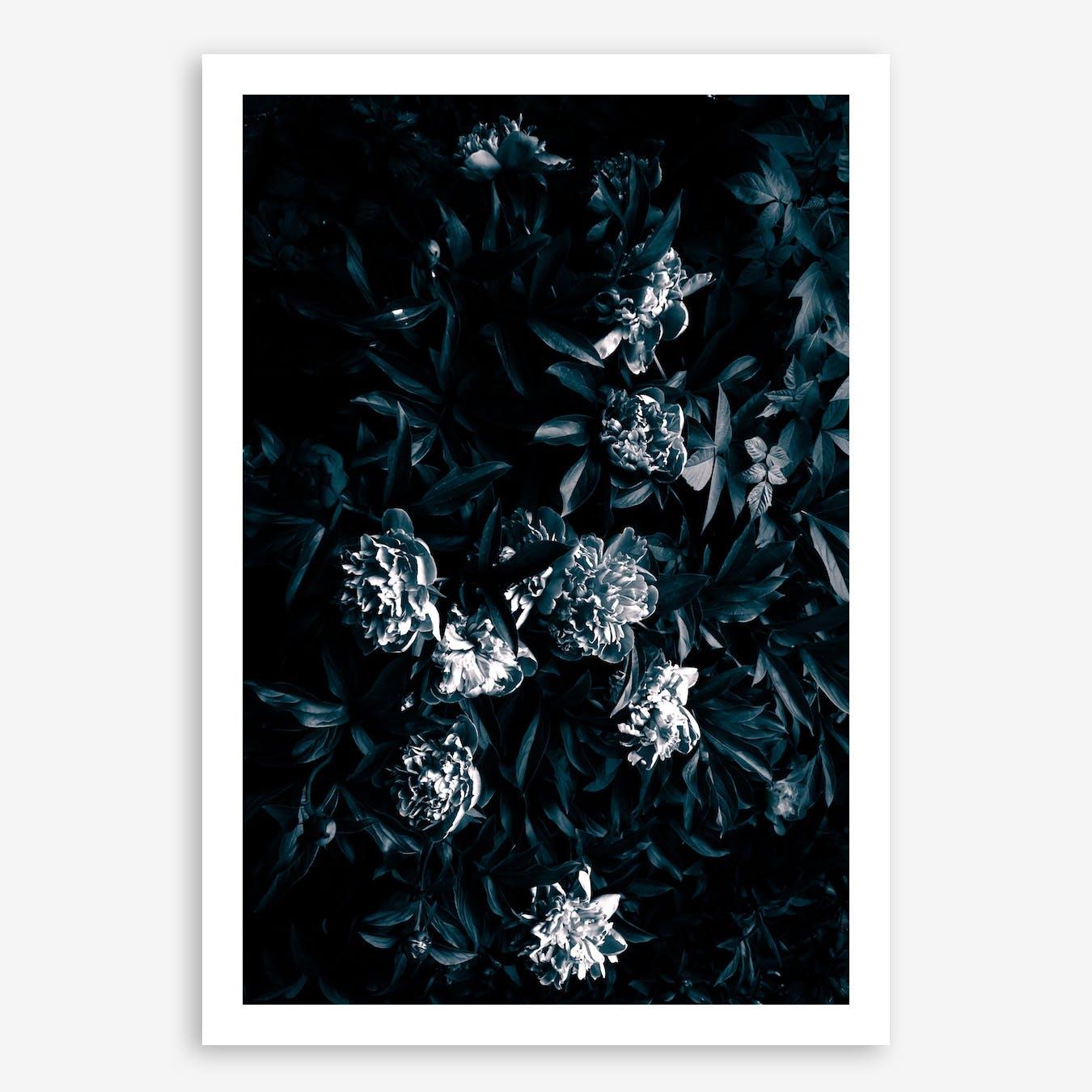 Florals Afterdark In Print
