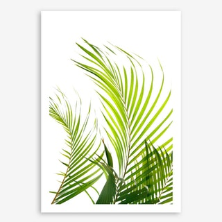 Palm Fronds In Art Print
