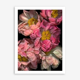 Pressed And Pretty In Art Print