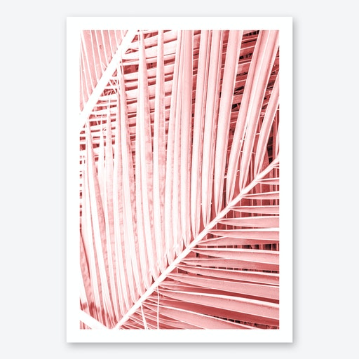 Tropics Print