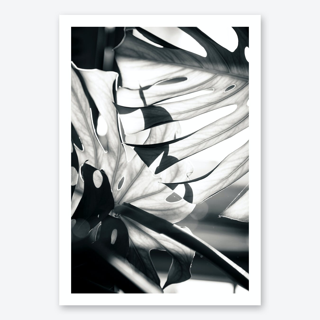 Mono Leaves Art Print