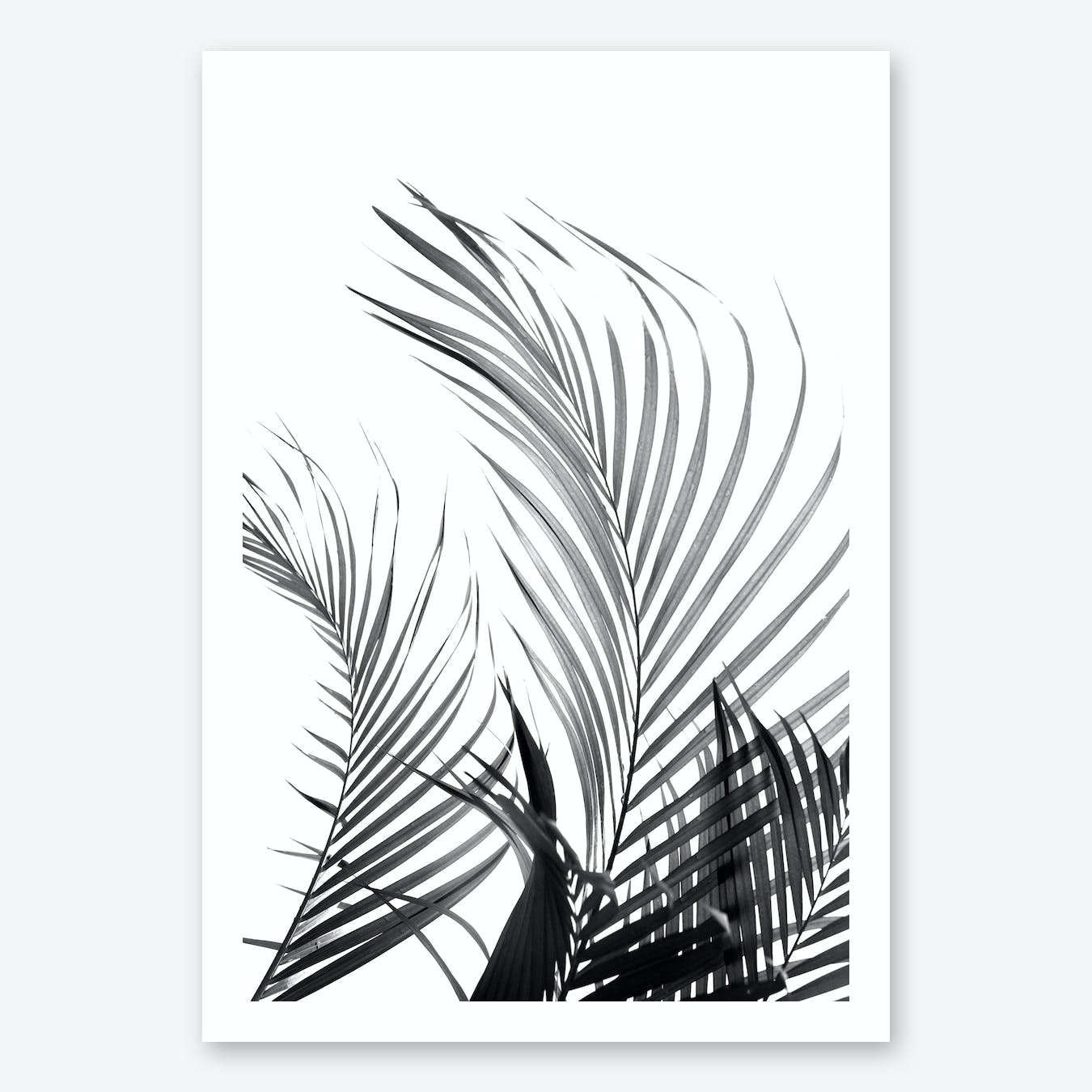 Palm Fronds in Black & White Art Print