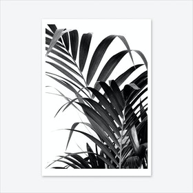 Palm Leaf 02 Art Print