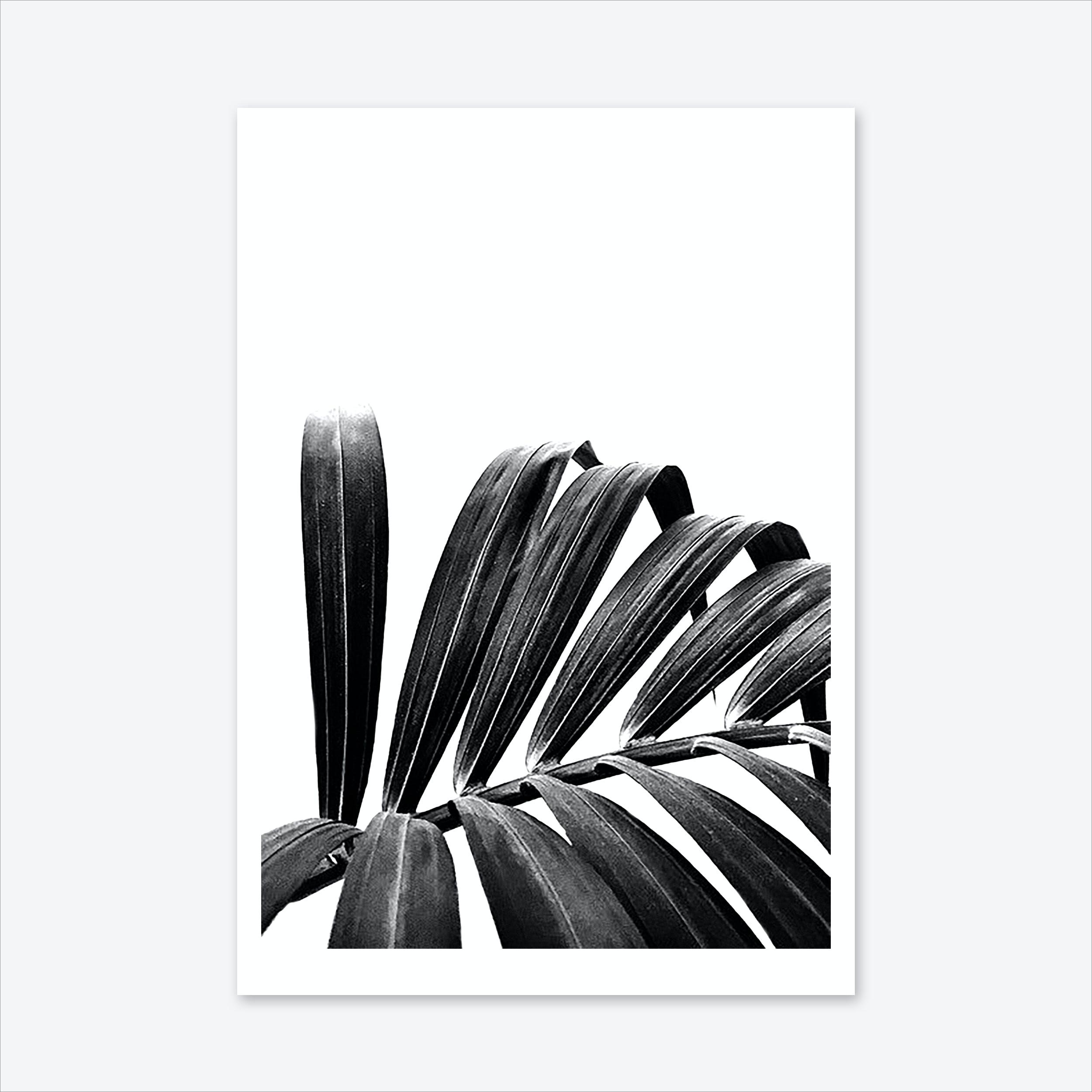 Palm Leaf 03 Art Print