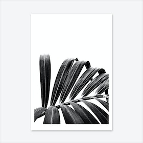 Palm Leaf 03 Art Print