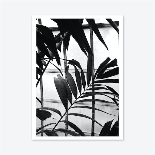 Botanical Shadow Art Print