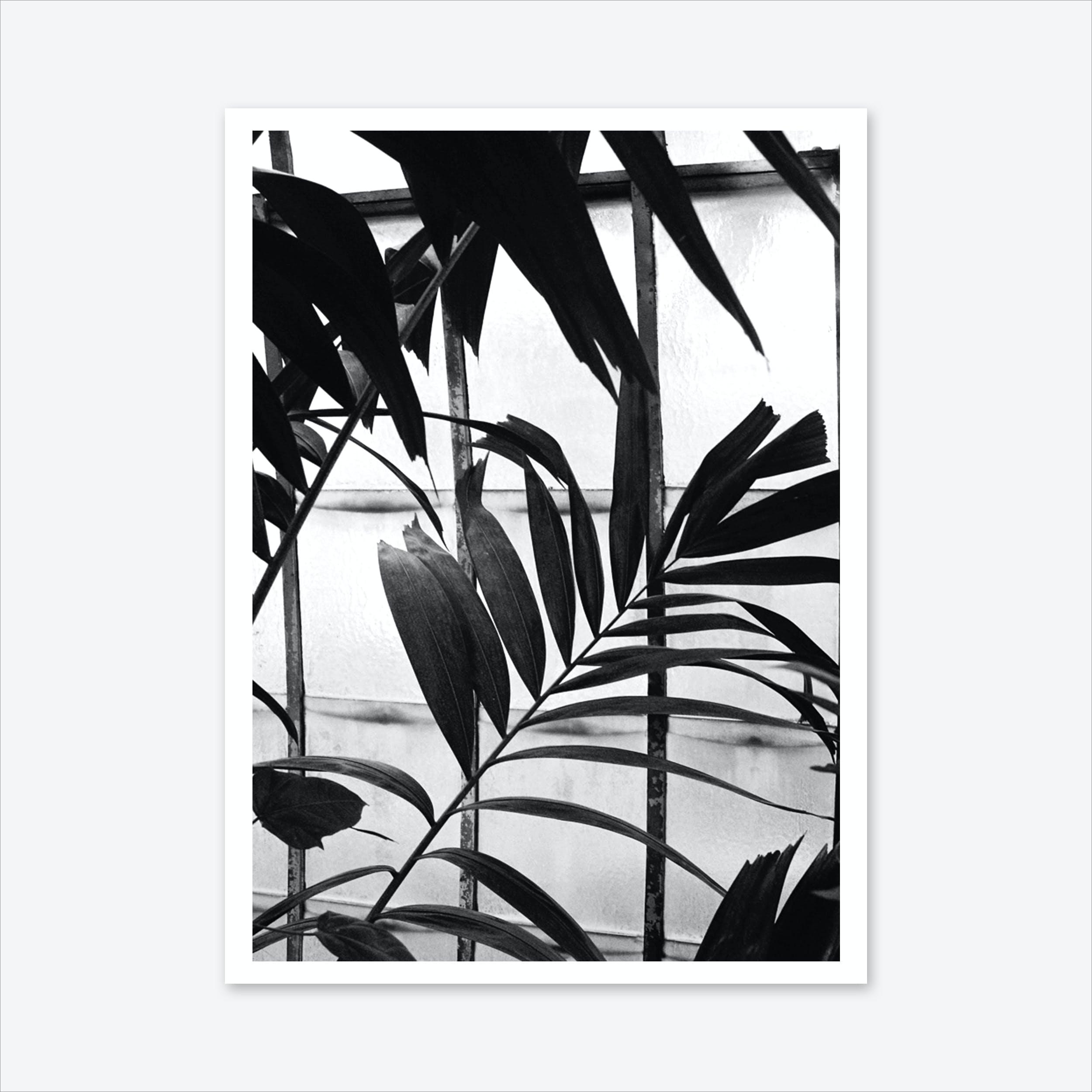 Botanical Shadow Art Print