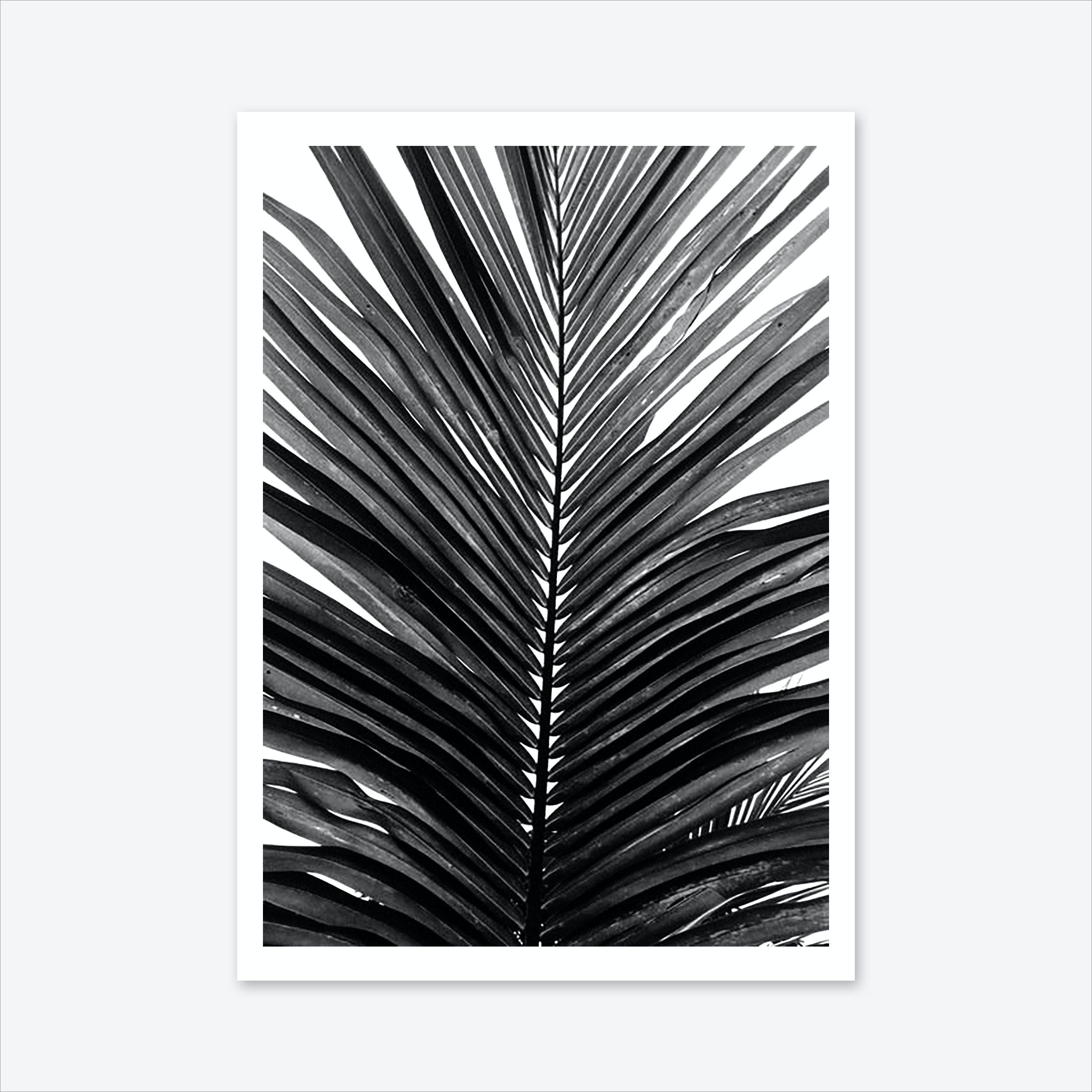 Palm Leaf 01 Art Print