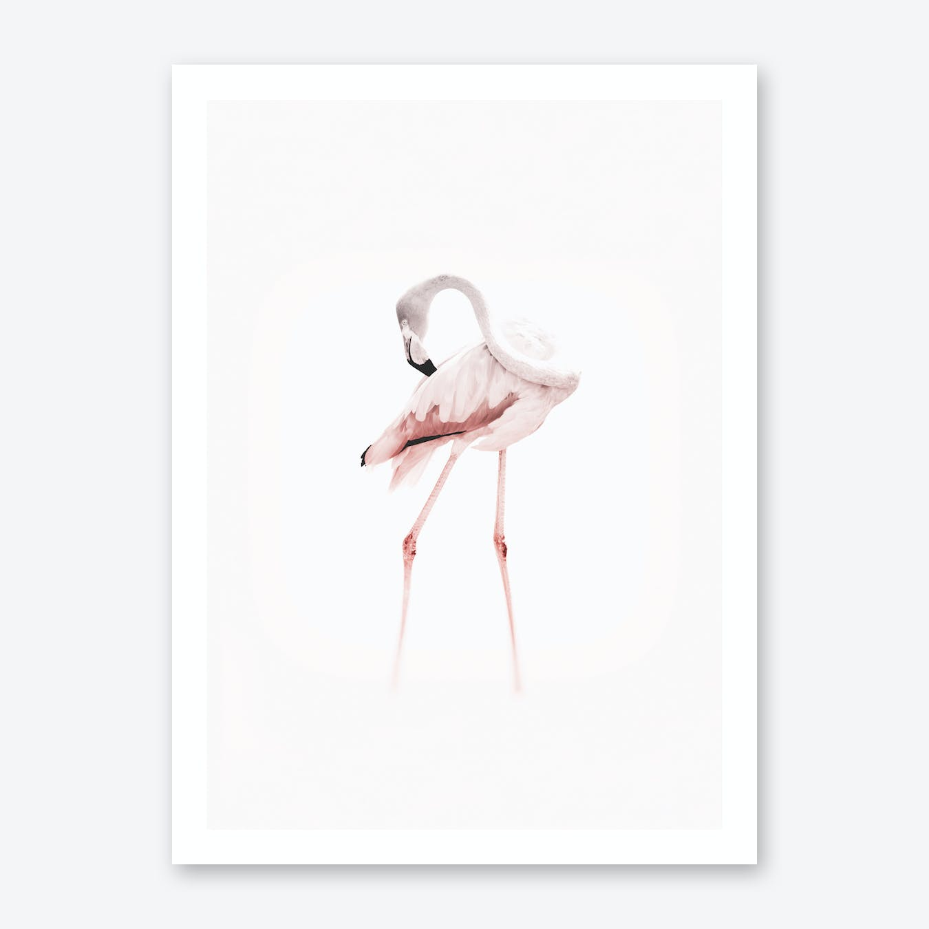 Pink Toned Flamingo Art Print