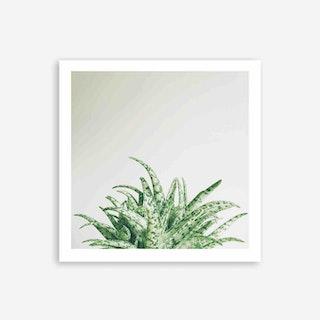 Aloe Spider Art Print