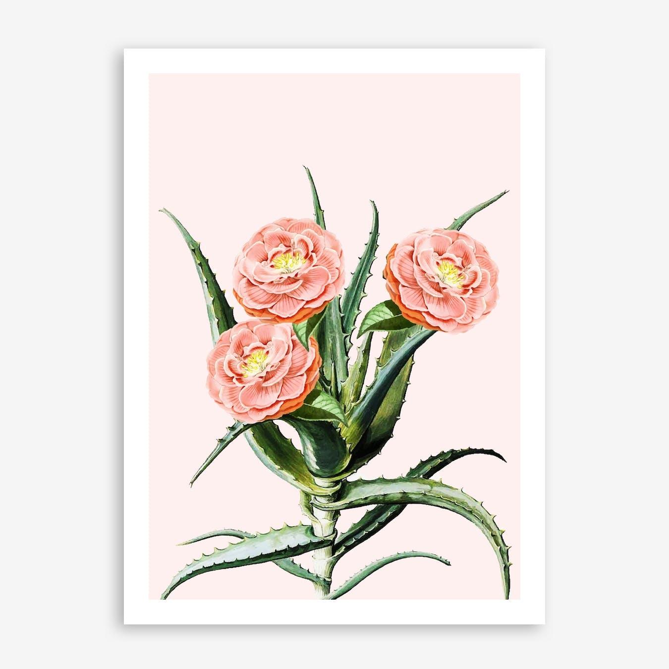 Blush Cactus V2 In Print