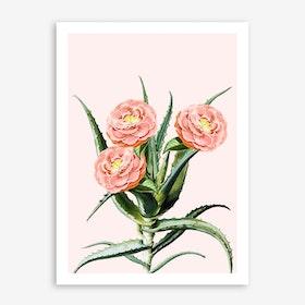 Blush Cactus V2 In Art Print