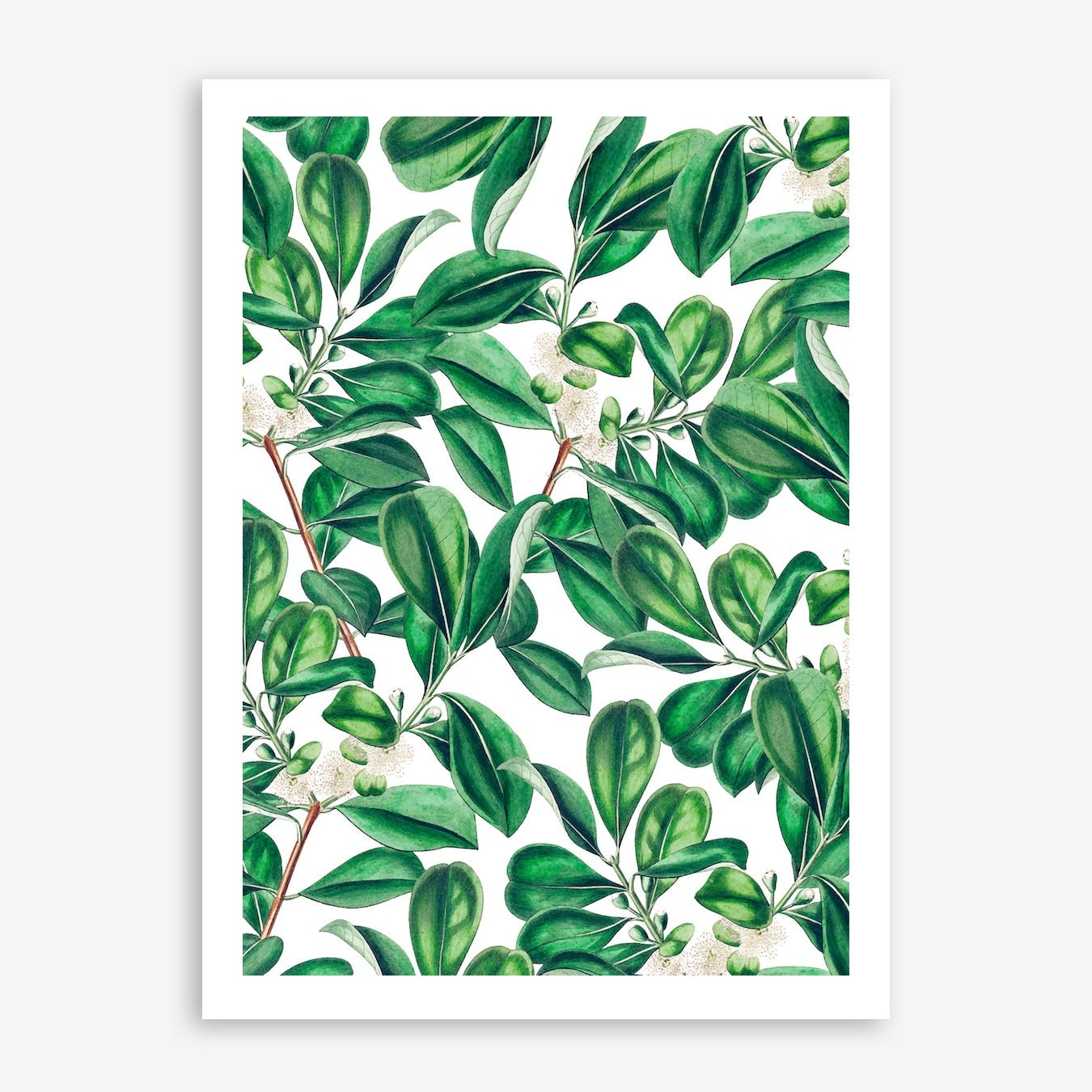 Botanica In Print