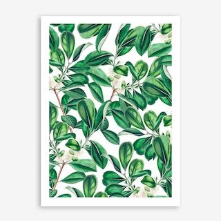 Botanica In Art Print