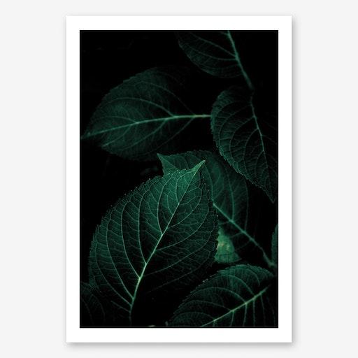 Dark Leaves 1 Art Print