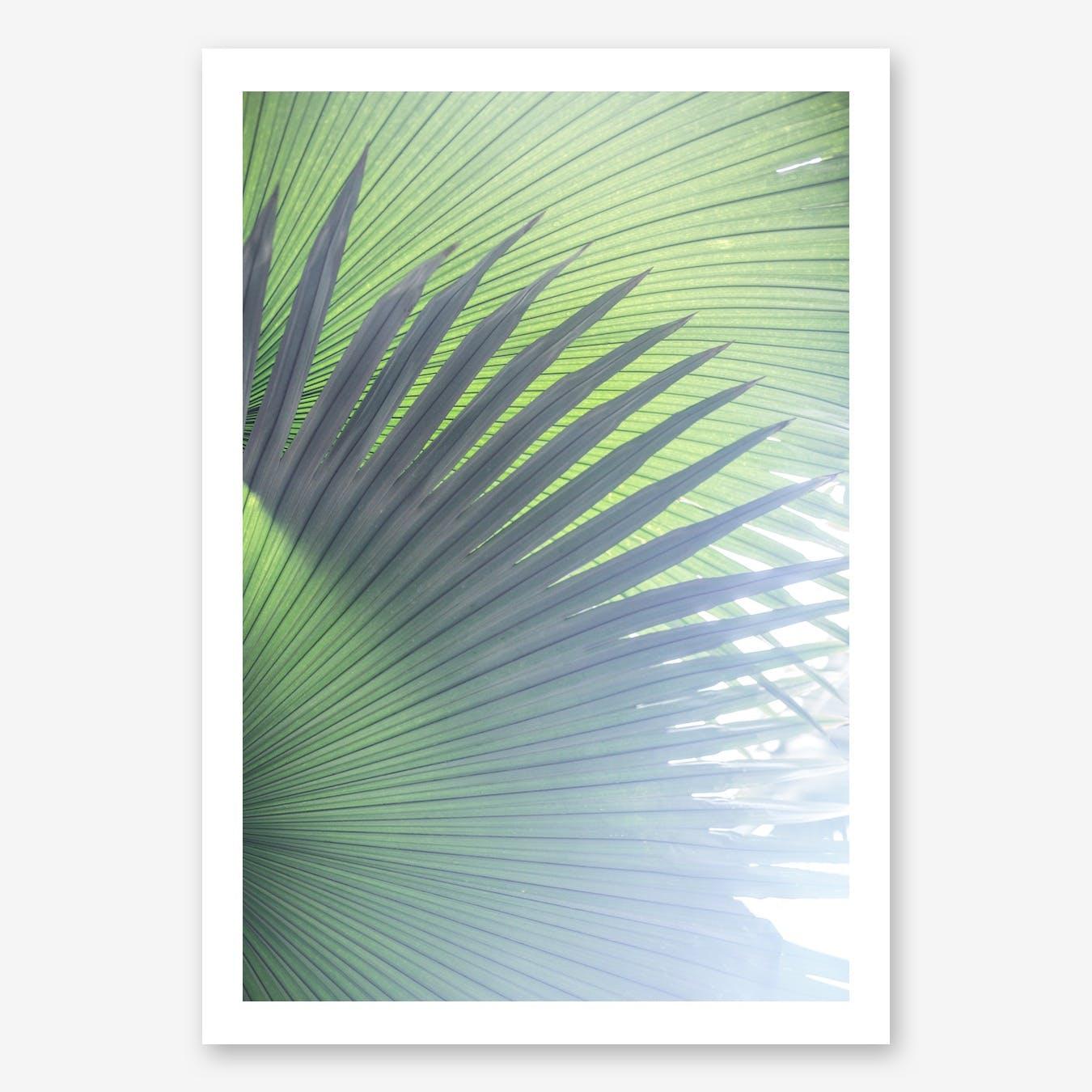 Palm Leaves 5 Art Print
