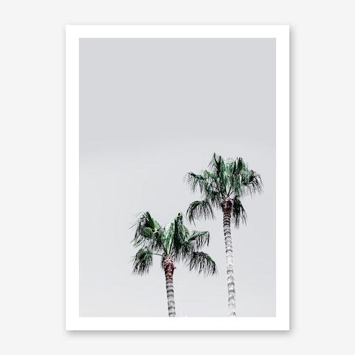 Palm Trees 6