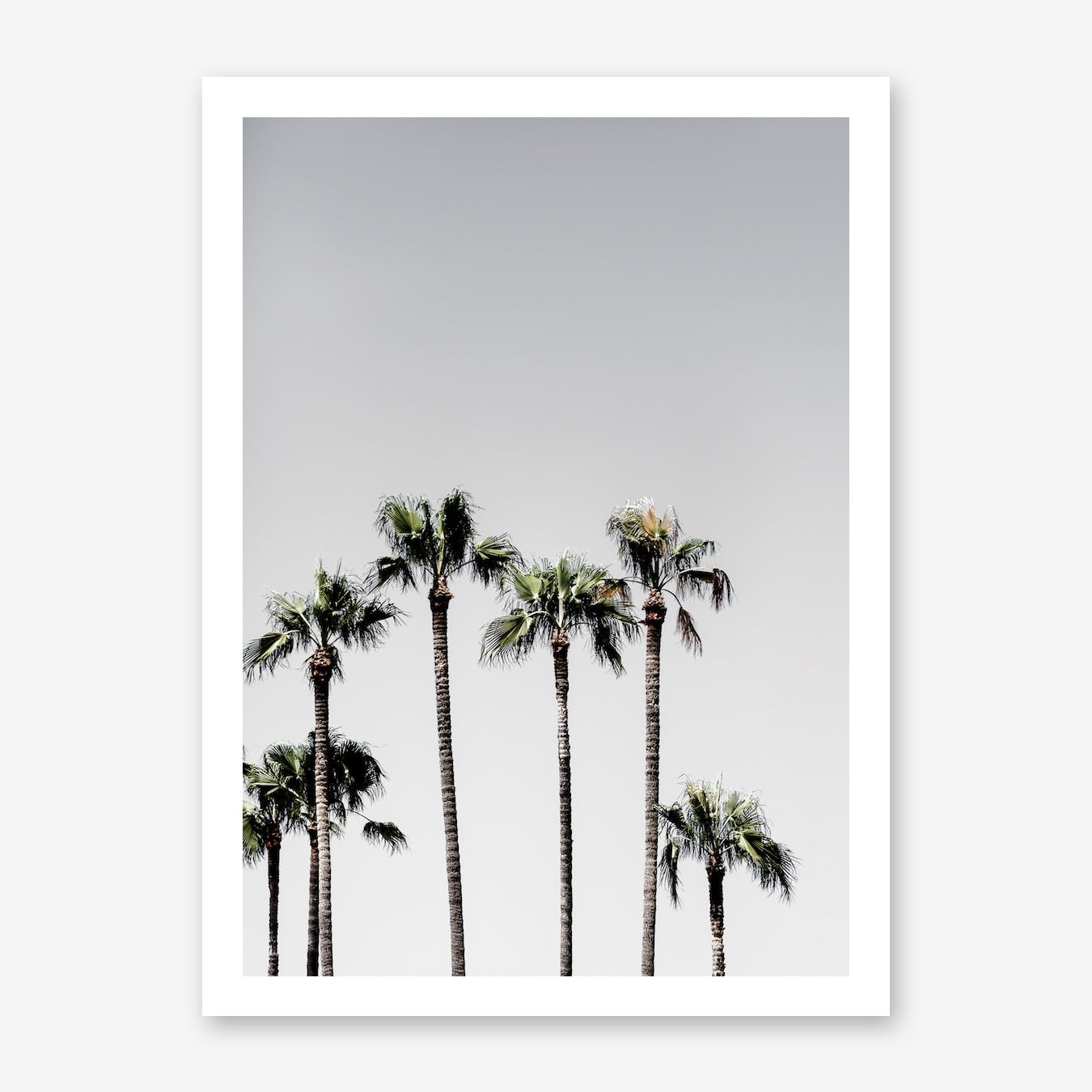 Palm Trees 5