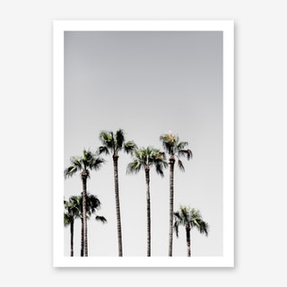 Palm Trees 5 Art Print
