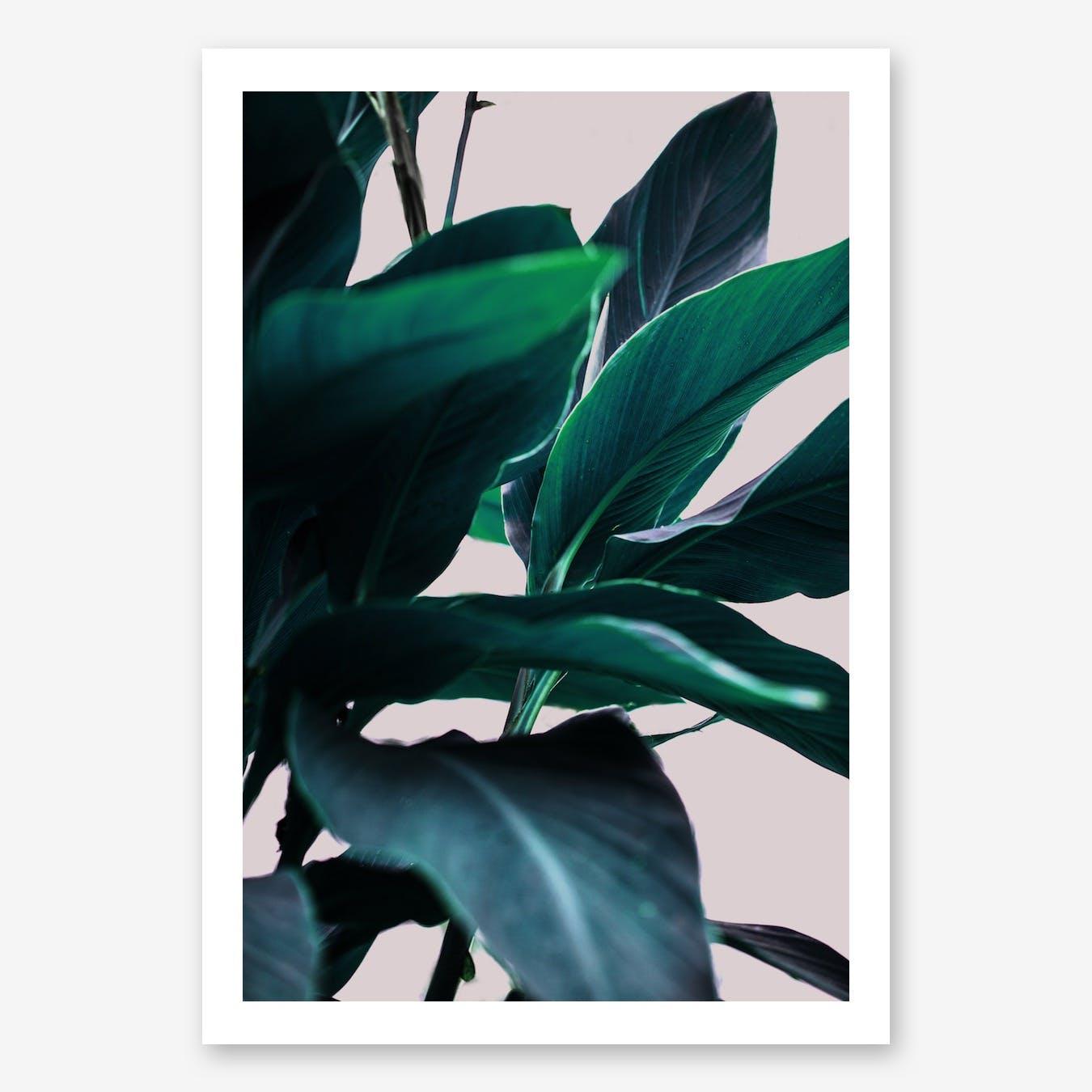 Leaves 4 Art Print