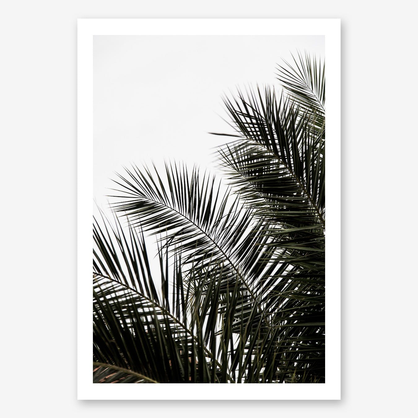 Palm Leaves 3 Art Print