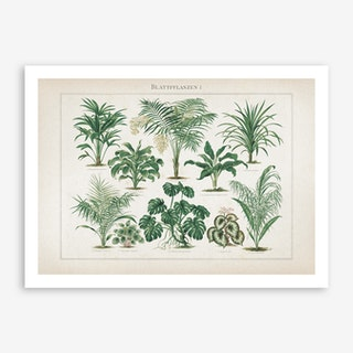 Vintage Meyers 1 Blattpflanzen 1 Art Print