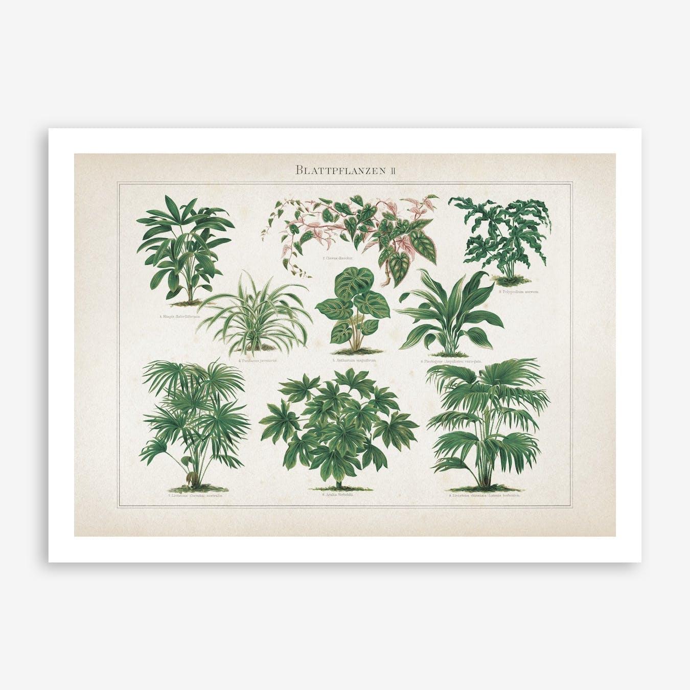 Vintage Meyers 1 Blattpflanzen 2