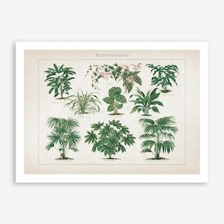 Vintage Meyers 1 Blattpflanzen 2 Art Print