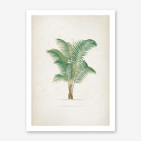 Vintage Kerchove 2 Les Palmiers 1 Art Print
