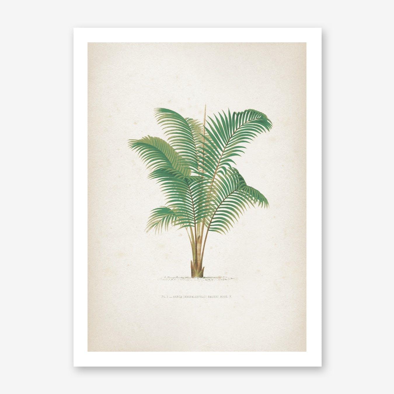 Kerchove, Les Palmiers 1