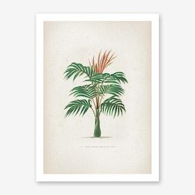 Vintage Kerchove 2 Les Palmiers 6 Art Print