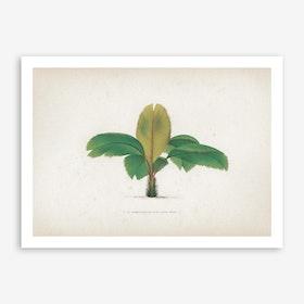 Vintage Kerchove 1 Les Palmiers 12 Art Print