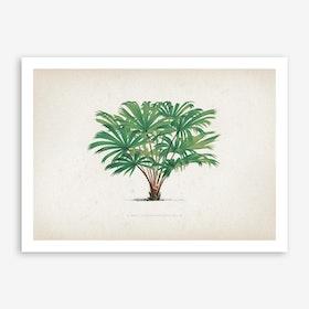 Vintage Kerchove 1 Les Palmiers 33 Art Print