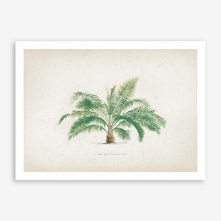 Vintage Kerchove 1 Les Palmiers 37 Art Print