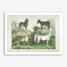 Vintage Schubert 2 Huftiere 27 Art Print