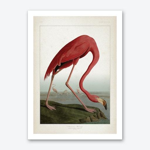 Vintage Audubon 1 American Flamingo Art Print