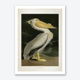 Vintage Audubon 1 American White Pelican Art Print