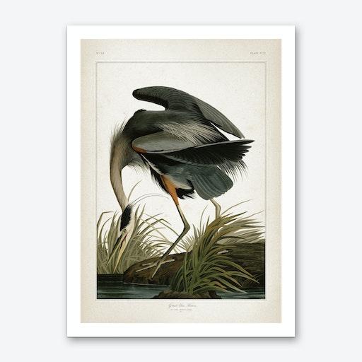 Vintage Audubon 1 Great Blue Heron Art Print