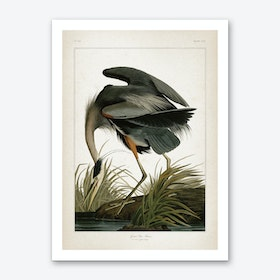 Vintage Audubon 1 Great Blue Heron Art Print