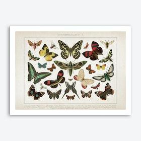 Vintage Brockhaus 1 Schmetterlinge 1 Art Print