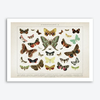 Vintage Brockhaus 1 Schmetterlinge 2 Art Print