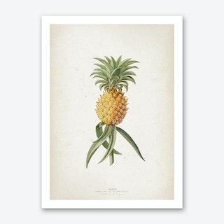 Vintage Ehret 1 Ananas Aculeatus Art Print
