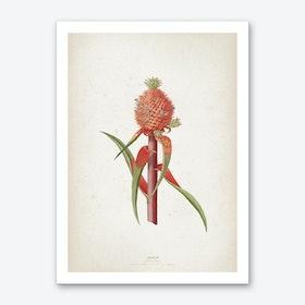 Vintage Ehret 1 Ananas Folio Art Print