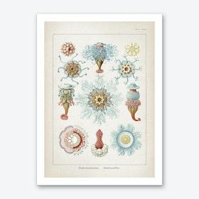 Vintage Haeckel 1 Tafel 17 Art Print